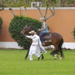 Chalan leads Paso Fino and rider, Peru - © Howard Feigenbaum